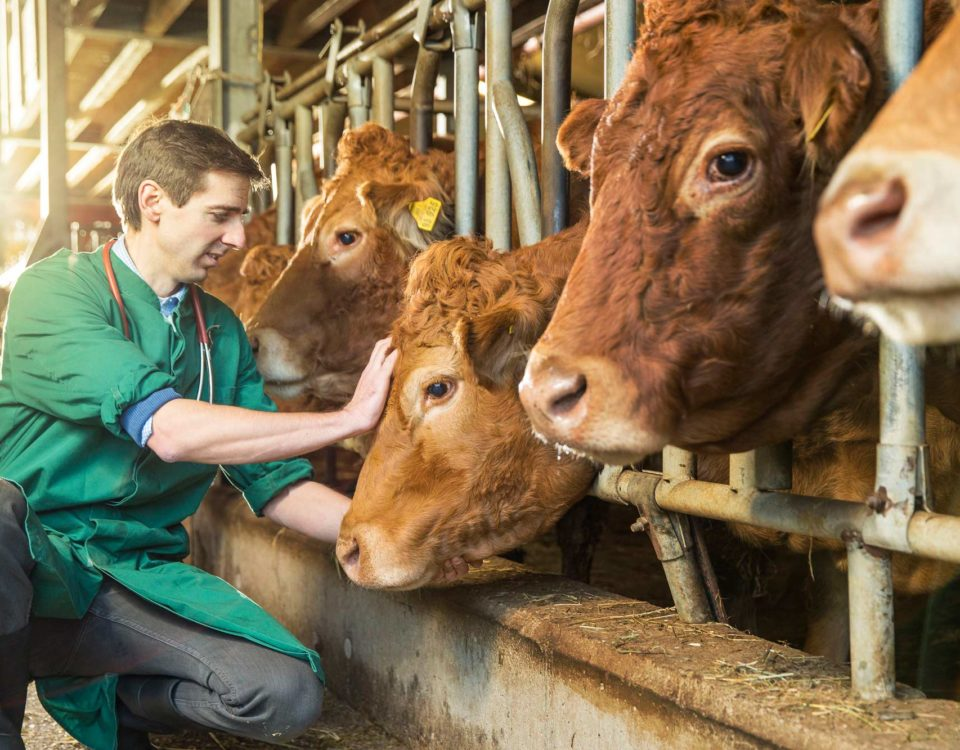 veterinary, pets, cattle